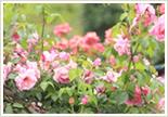スタンディングブーケやタイガース公認花束を販売する江坂の花屋の通信販売フラワーショップフロレゾン