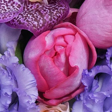 香りのよい薔薇イブピアッチェ