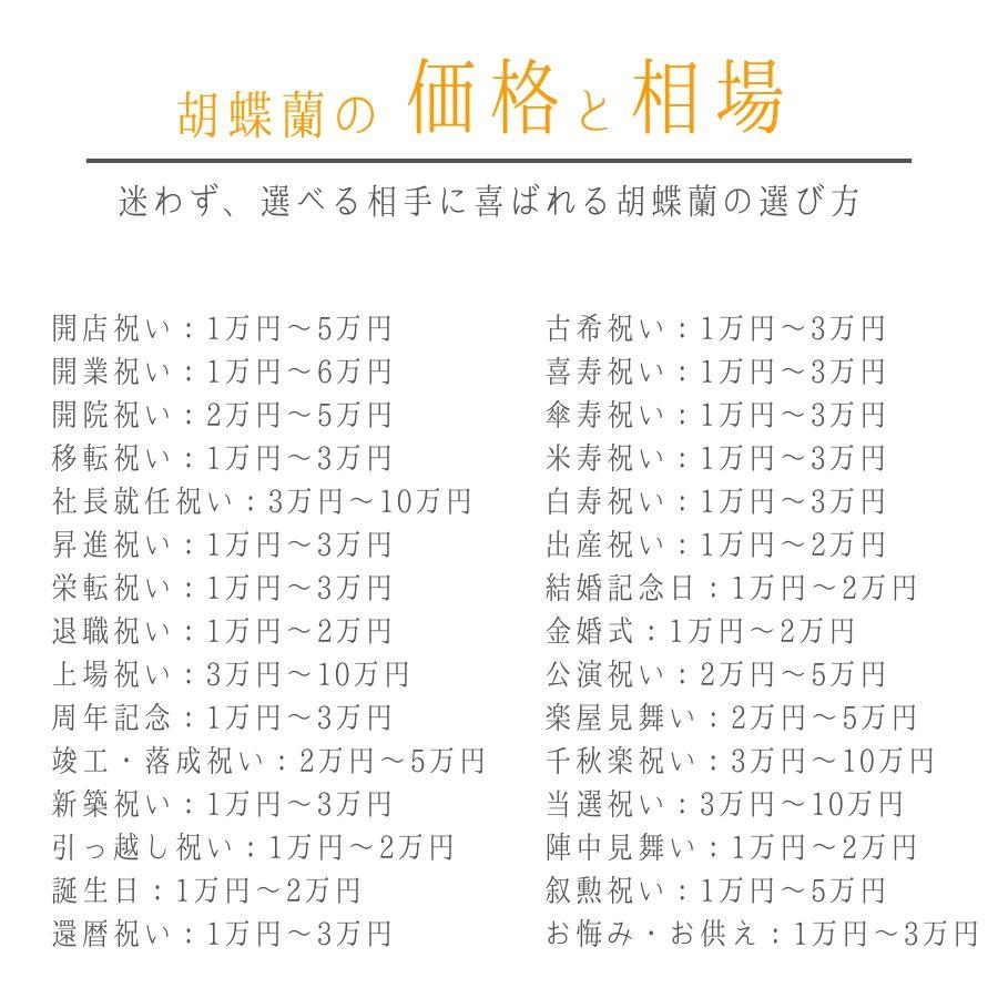 胡蝶蘭の価格と相場