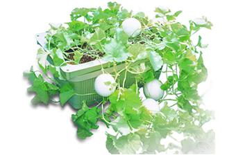 循環により家庭での有機水耕栽培が可能に